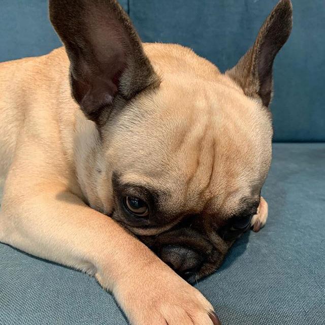 ヘアサロンイランイランの看板犬の写真