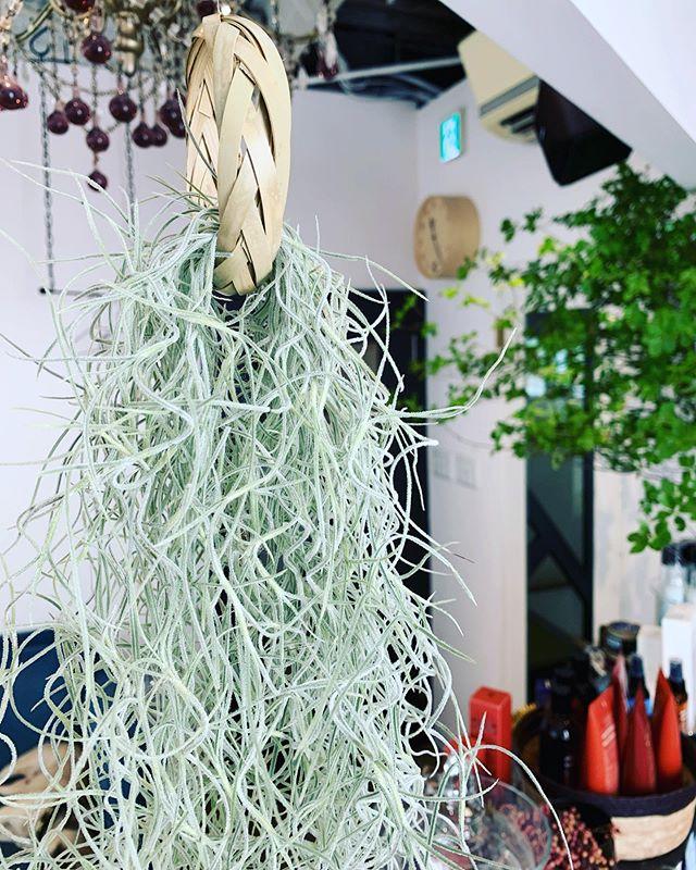 イランイランに飾っている竹細工