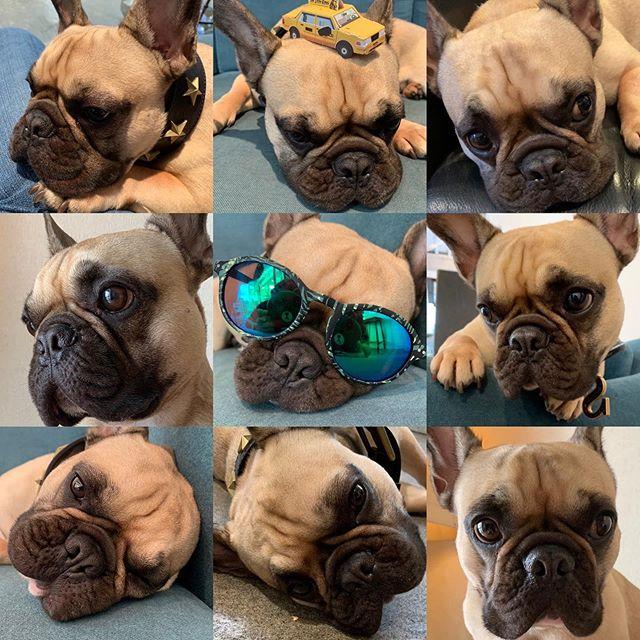 ヘアサロンイランイランの看板犬写真