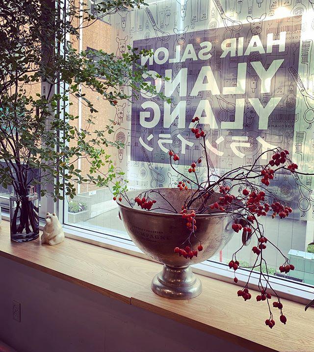 イランイランに飾っている植物の写真