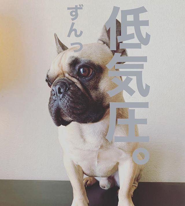 イランイランの看板犬サブロウの写真
