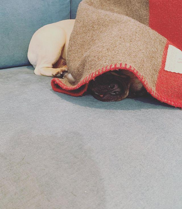 美容院イランイランの看板犬サブロウの写真